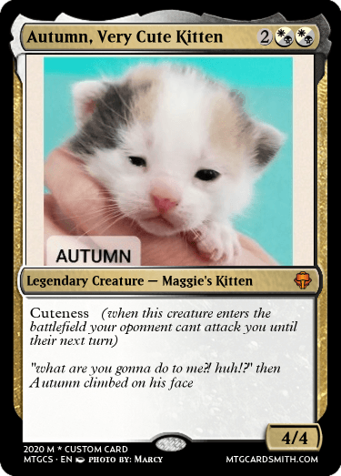 Autumn, Very Cute Kitten